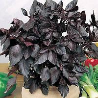 Семена однолетнего изысканного ароматного фиолетового Базилика для приготовления блюд сорта Темный Опал