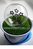 Ночник Цветок Lanterns Idea - светильник декор