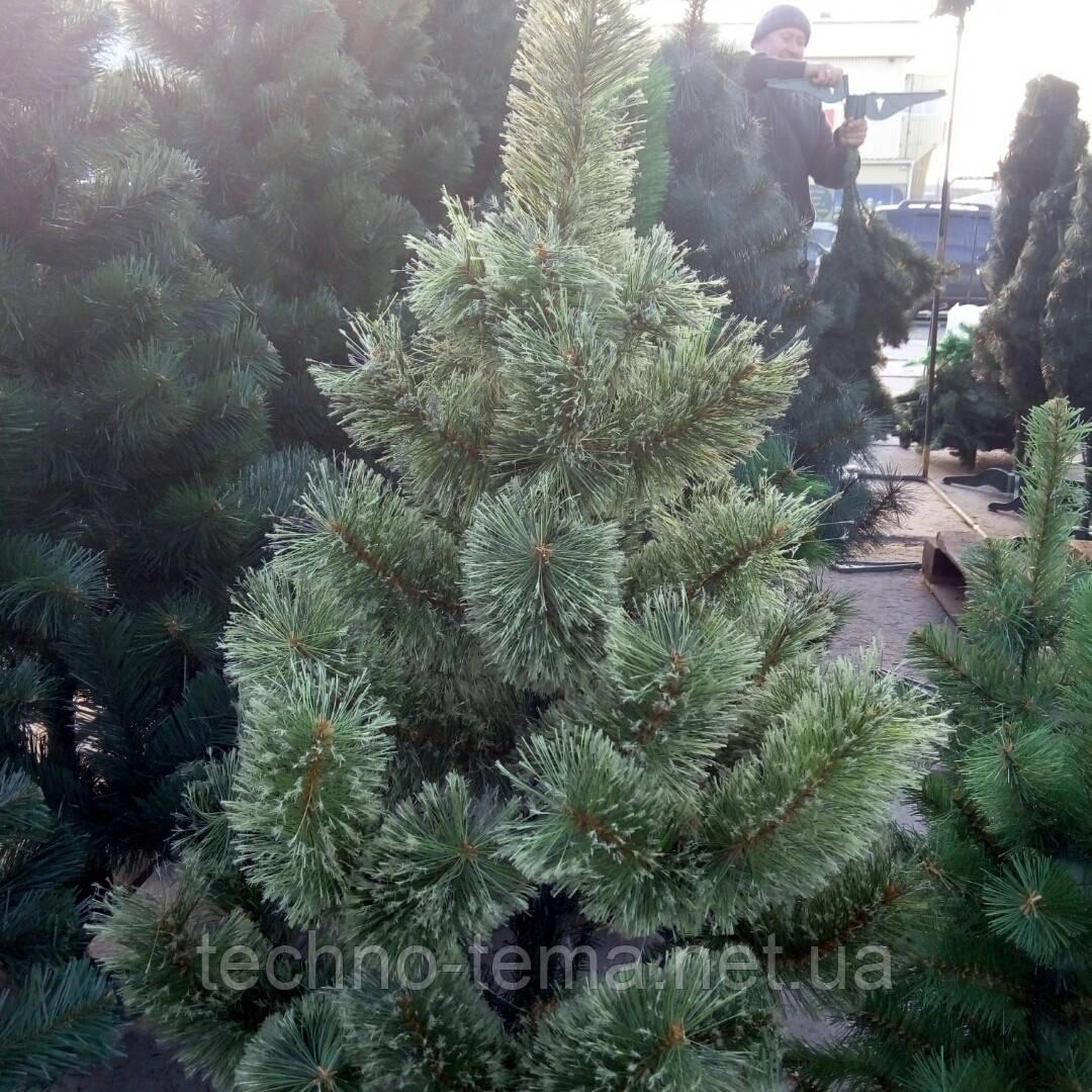 Сосна искусственная новогодняя 1.5 м