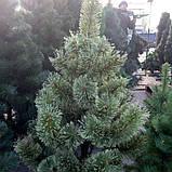 Сосна искусственная новогодняя 1.8 метра, фото 4