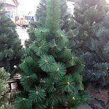 Сосна искусственная новогодняя 1.8 метра, фото 3