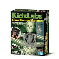 Научно-игровой набор. Скелет человека.
