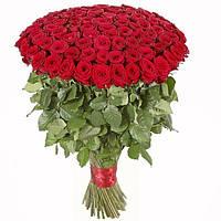 """101 роза в классическом стиле """"Мадонна"""""""