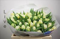 Тюльпан голландский  оптом