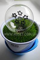 Ночник в горшочке -  Flower light от Lanterns Idea