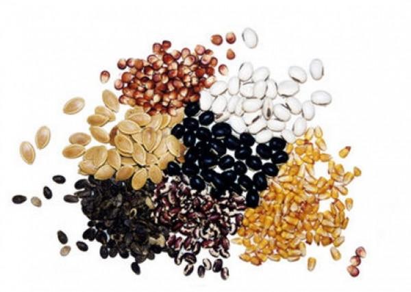 Вагове насіня овочевих і баштанних культур