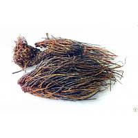 Красная щетка, корень Красной щетки 100 грамм (Родиола холодная)