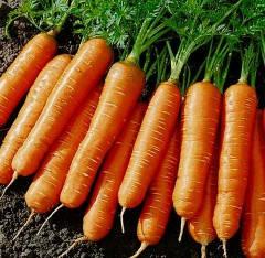 Морква столова