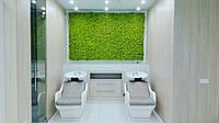 Озеленение из стабилизированного мха
