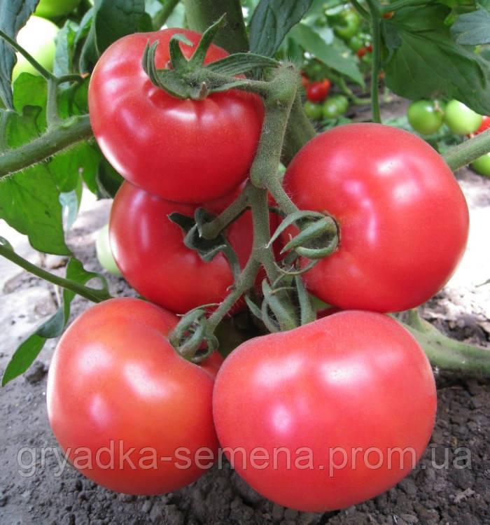 Томат Китару F1 ( KС 14 F1) Kitano Seeds 500 семян