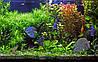 Фотопанно Рыбы. Печать на кафеле, плитка 20х30 см.