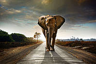 Фотопанно Слон. Печать на кафеле, плитка 20х30 см.