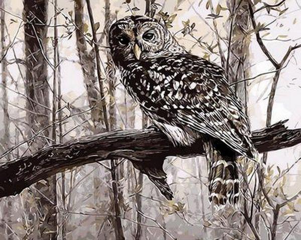 Набор-раскраска по номерам Сова в зимнем лесу худ. Кобейн Рассел
