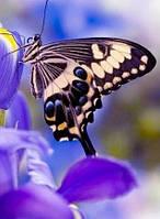Алмазная вышивка Нежная бабочка KLN 20 х 26 см (арт. FS180)
