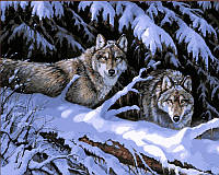 Рисование по номерам 40 × 50 см. Волки в лесу худ. Миллетт, Розмари