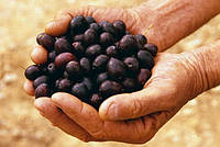 Оливки, маслины, каперсы