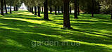 Семена газона SHADOW 7,5 кг ДЛФ ТРИФОЛИУМ, фото 2