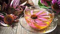 Чай с эхинацеей - универсальное средство при простуде и гриппе!