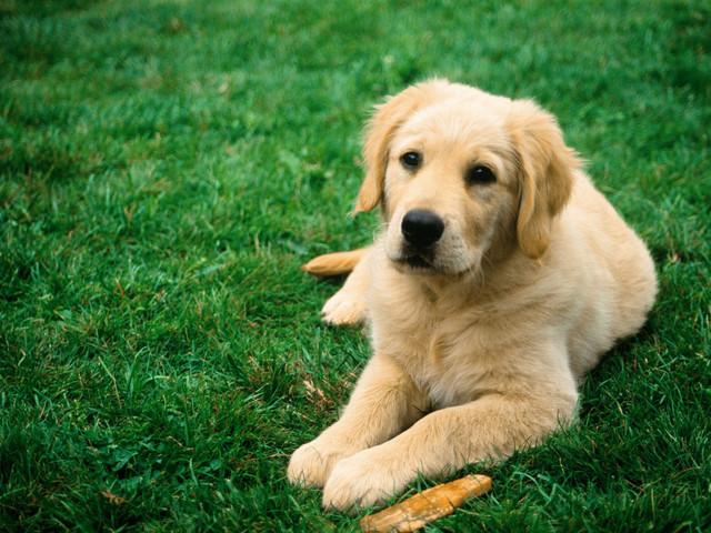 Корм для собак Brit Care • Брит Кеа