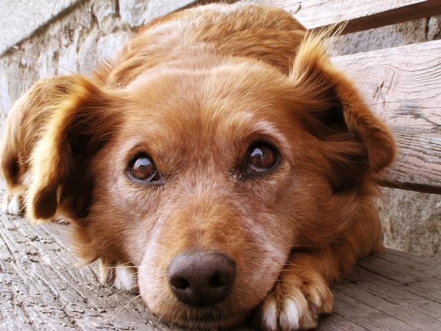 Корм для собак Bavaro • Баваро