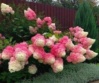 Декоративные цветы и растения
