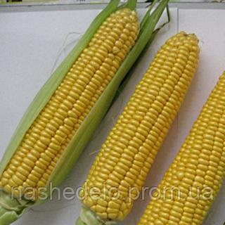 Cемена кукурузы Вега 0,5 кг. May Seeds