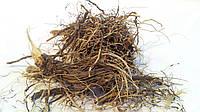Левзея сафлоровидная корневища 100 грамм (маралий корень, большеголовник, Стемаканта)