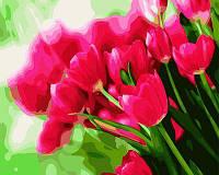 Картина раскраска по номерам без коробки Ярко-розовые тюльпаны  40 х 50 см