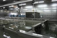 Предприятие по производству сыра