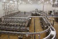 Купить завод по производству сыра