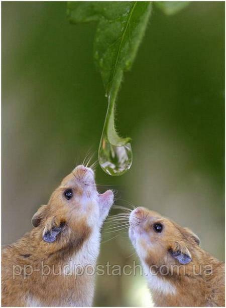 Собираем и используем дождевую воду