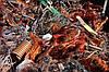 ПОКУПАЕМ  лом и отходы цветных металлов