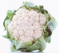 Семена капуста цветная Кашмир Ф1 (1000 семян)