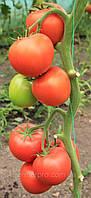 Семена томат Белфаст F1 \ Belfast F1 500 семян Enza Zaden