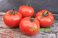 Семена томата Монсан F1 \ Monsan F1 500 семян Enza Zaden