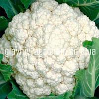 Семена капуста цветная Инклайн Ф1