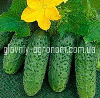 Семена огурец Ира Ф1