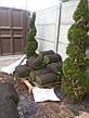 Рулонный газон Универсальный. Газон в рулонах, фото 5