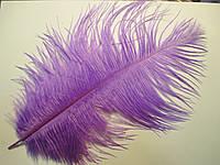 Перо страуса 25-30 см бузкове
