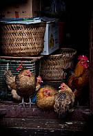 Oборудование для птицеводства Facco Poultry Equipment