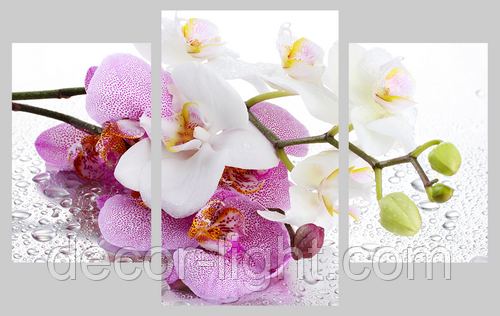 Картина модульная орхидея МD 015