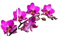 Картина модульная орхидея