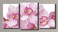 Картина модульная на холсте Розовые орхидеи 3