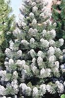 Елка европейская зеленая 150 (см) иголки леска ПВХ Италия ,кончик в снегу