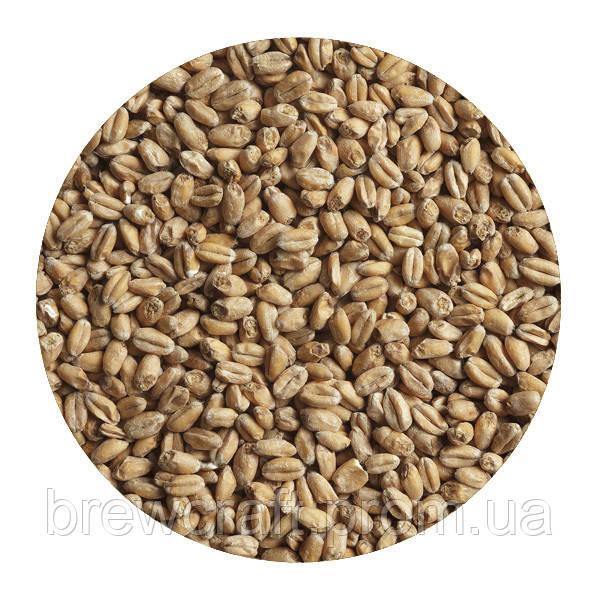 Солод зерновой пшеничный украинский. Malteurop. 1 кг