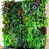 Ученые назвали 5 самых полезных растений для дома!