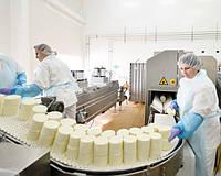 Производство сыра мягких сортов