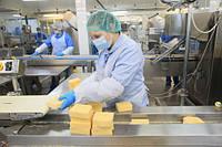 Машина резки блоков сыра