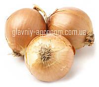 Семена лук репчатый Спениш Медальон Ф1 (2 г упаковка)