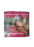 Свекла (Буряк) РЕКОРД  1 кг розовый (оригинал) Польша